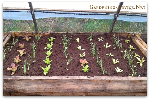 raised bed built from scaffolding planks